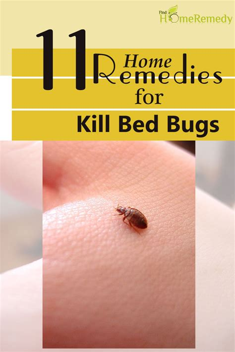 how to stop bed bugs from biting bed bugs herbal remedies natural treatments and cure find home remedy supplements