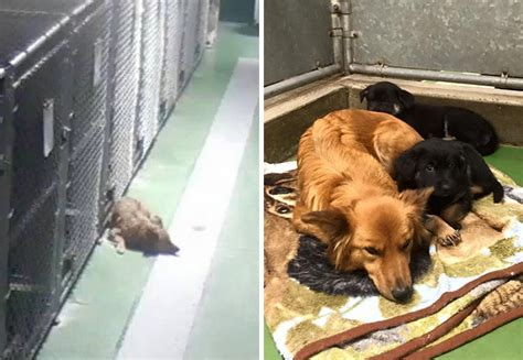 Dog Breaks Out Of Kennel To Comfort Abandoned Crying