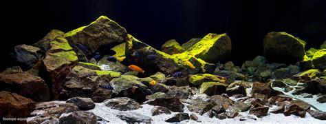 aquarium design criteria evaluation criteria for the international biotope aquarium