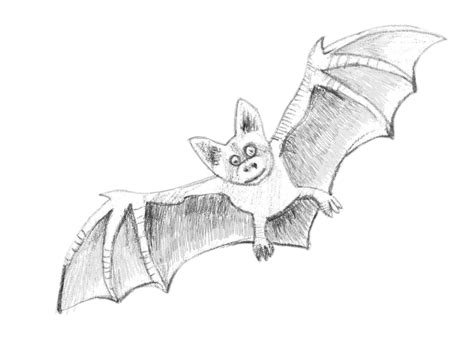 how to sketch how to draw a bat step by step