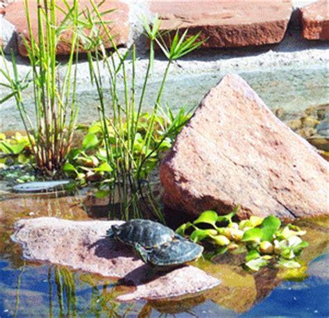 Landscape Design Las Cruces Nm Green Lizard Landscape Design Installation Company In