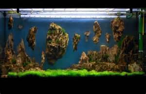 allestimento acquario aquarium setup aquascape