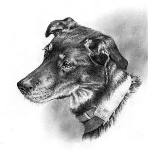 imagenes blanco y negro de animales 15 dibujos de perros que de seguro amar 225 s arte feed