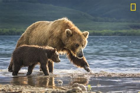 a nature companion wildlife through the year books national geographic nature photographer of the year