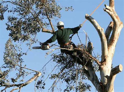costo giardiniere tree climbing cesena potatura abbattimento piante alberi