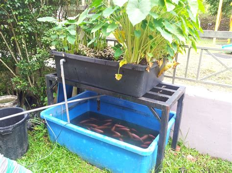 triyae backyard aquaponics kit various design