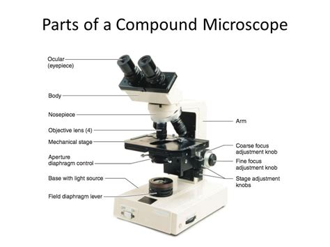 what part of the microscope regulates the amount of light lab 1 part 1 media types and uses ppt video online