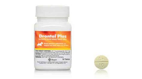 deworming medicine for puppies drontal plus deworming medicine for dogs and cats petcarerx