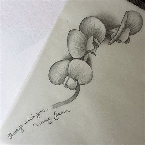 sweet pea flower tattoo designs sweet pea black and white www pixshark