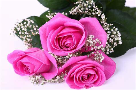 Wallpaper Bunga Yang Cantik | gambar bunga mawar yang cantik cantik