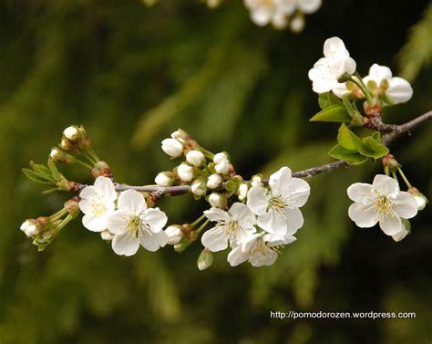 immagini fiori per desktop sfondi desktop fiori