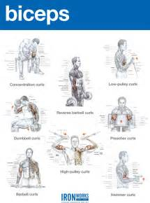 blogarticleback traps and biceps workout 37 iron works