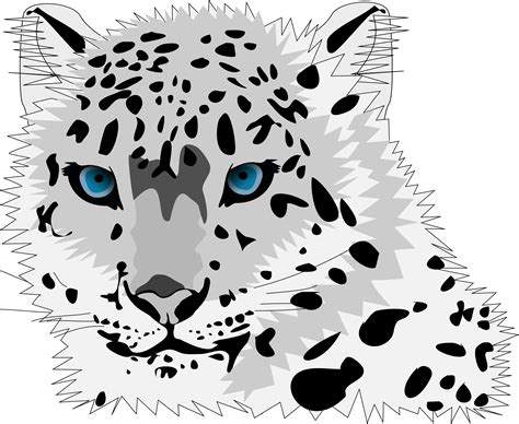 domain leopard image the graphics snow leopard vector graphic image free stock photo