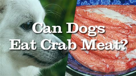 can dogs eat crab can dogs eat crab pet consider