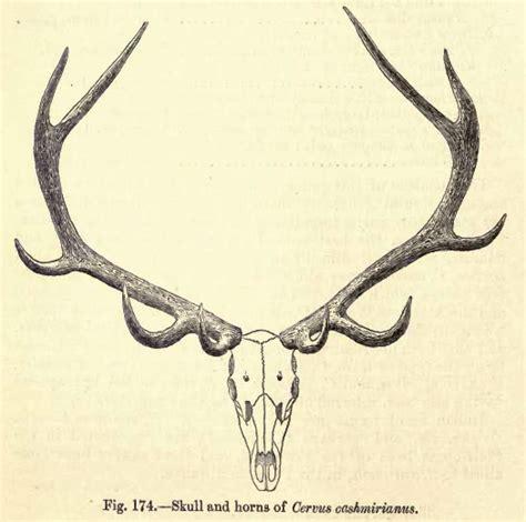 Horns And Antlers it s brain time antlers vs horns vs pronghorns
