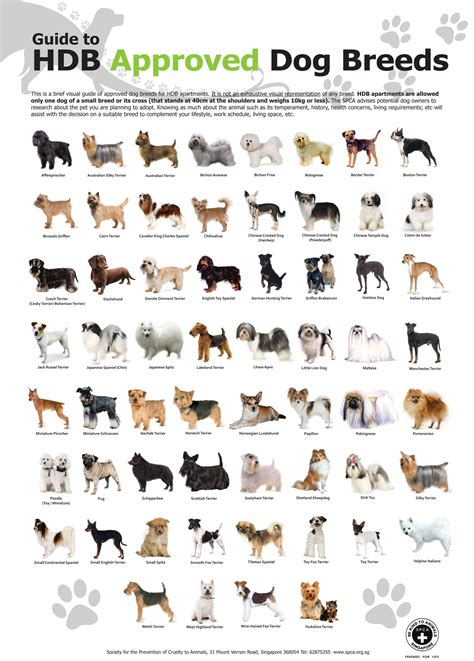 dogs breed hdb approved breeds lostpaws singapore pet adoption lost found