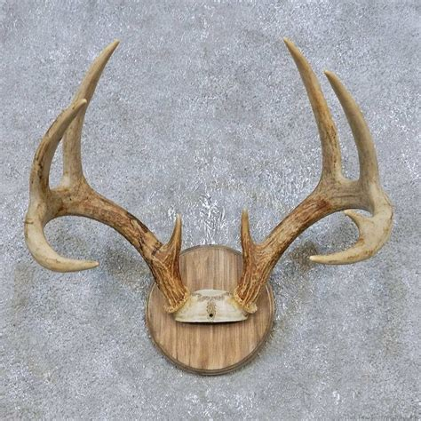 Deer Rack For Sale by Whitetail Deer Antler Plaque Mount For Sale 14778 The