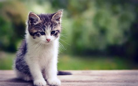 cat background baby cat wallpaper 59 images
