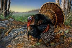 wild turkey for thanksgiving thanksgiving a time to do youpick the brain motivation