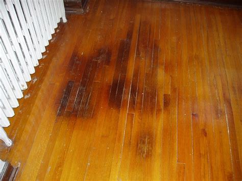 dogs and hardwood floors how to get rid of urine smell in house from carpet in yard on concrete