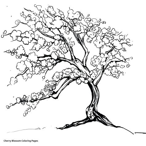 japanese cherry tree coloring page coloring cherry blossom coloring pages within tree page