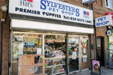 puppies pet shop pets world