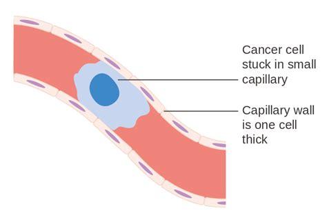 capillary diagram original file svg file nominally 347 215 341 pixels
