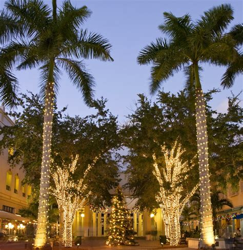 images of palm trees decorated for christmas decor for where you are on the map