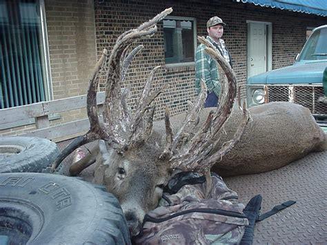Big Rack by Amazing Deer Racks