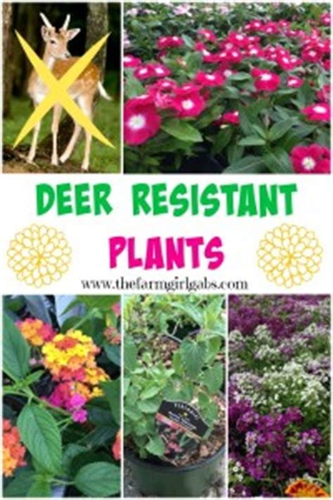 deer resistant plants the farm girl gabs 174 10 ways to get your gardens ready for spring the farm
