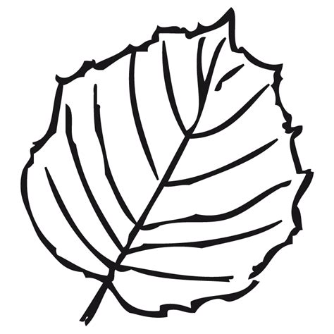 imagenes para colorear hojas image gallery dibujo hoja