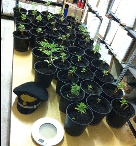 coltivare marijuana vaso calabria coltiva canapa su balcone arrestato