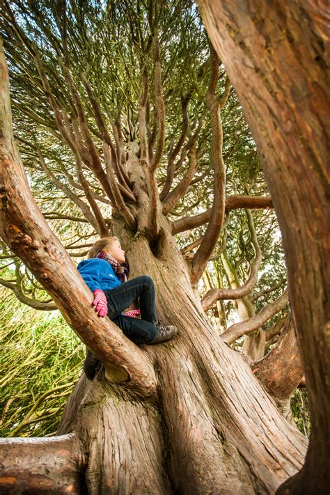 best tree the 50 ultimate locations for tree climbing beyond