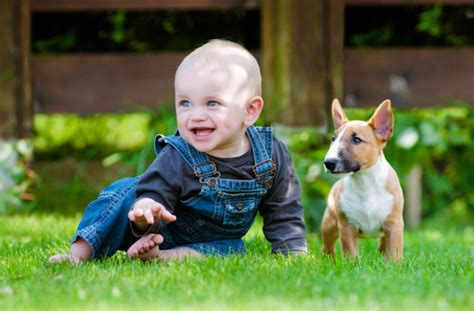 best dogs for babies best breeds for babies pawculture