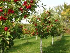 alberi da frutto piante da frutto alberi che fanno frutti