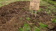 garten im herbst oder frühjahr umgraben umgraben ist nicht immer notwendig ndr de ratgeber