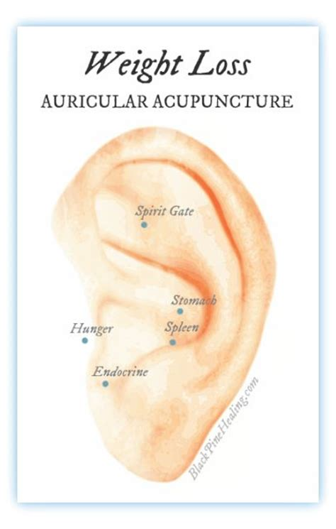 9 supplement combinations for weight loss 25 best images about auriculotherapi on ear