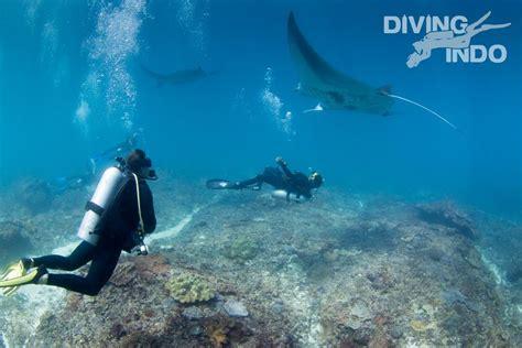 bali today manta diving  nusa penida diving indo