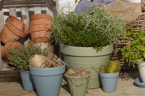 B And Q Garden Planters by Plant Pot Buying Guide Ideas Advice Diy At B Q