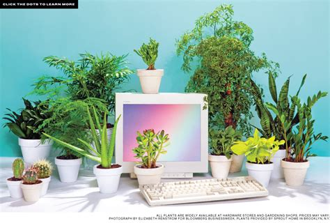 Plant For Office Desk Best Desk Plants 12 For The Office Bloomberg