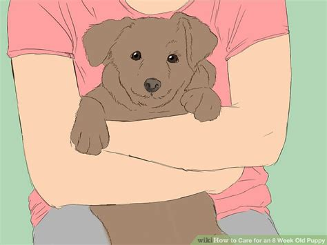 5 week puppy care how to care for an 8 week puppy with pictures wikihow