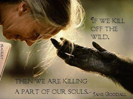17 best ideas about jane goodall on pinterest | impact