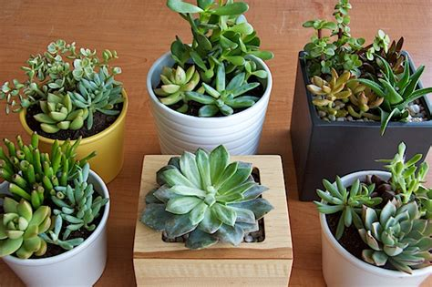How To Propagate Cacti Succulents Apartment Therapy - apartment therapy plants diy plant markers for your