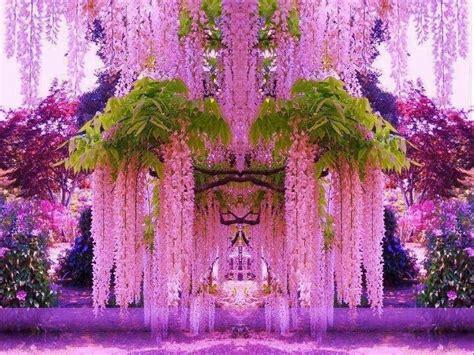 imagenes lindas raras 5 sementes de lindas flores wisteria glic 237 nias rosas raras