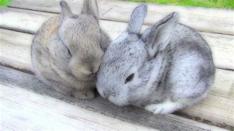Baby Bunnies In Backyard Very Cutest Baby Bunnies Funny Pets Sitting On The Bench