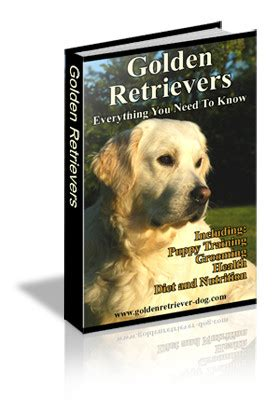 golden retriever book golden retriever guide golden retrievers everything
