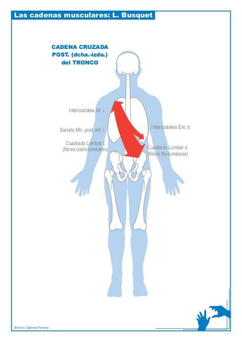 busquet cadenas musculares laminas - Cadenas Musculares Tronco