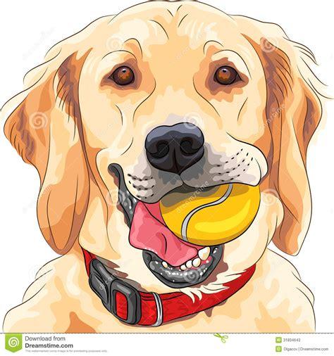 vector funny dog breed golden retriever  ball stock