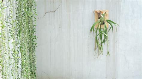 Lu Hias Untuk Teras Rumah tanaman hias untuk teras rumah living loving for all