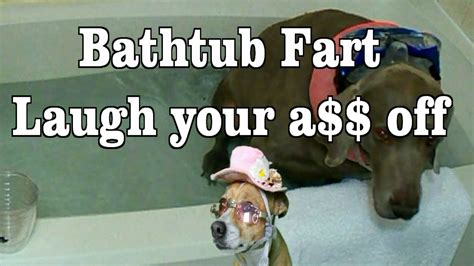 bathtub farts ultimate dog farts in bath tub and makes a funny face